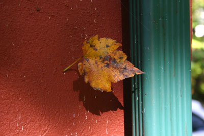 [ Photograph of a yellow leaf against a dark red-brown cement wall near a green drainspout ]